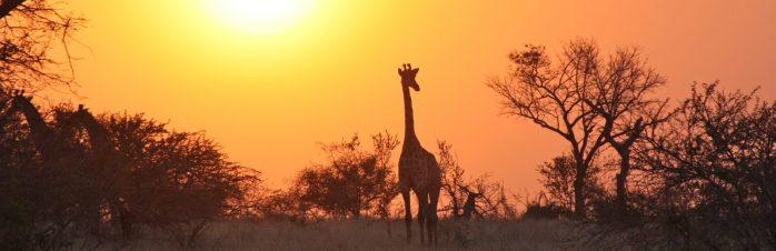 cropped-giraffe-1042618.jpg